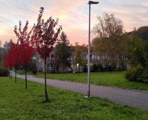 Podzim obarvil stromy před školní budovou
