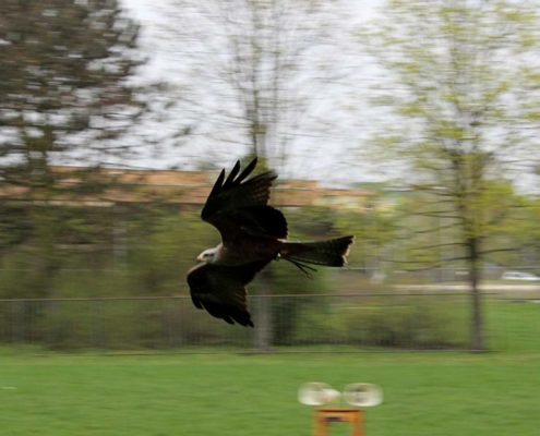 Den s dravými ptáky